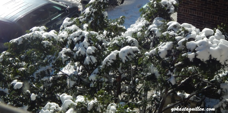 Disfrutando la Nieve, vista desde mi ventana