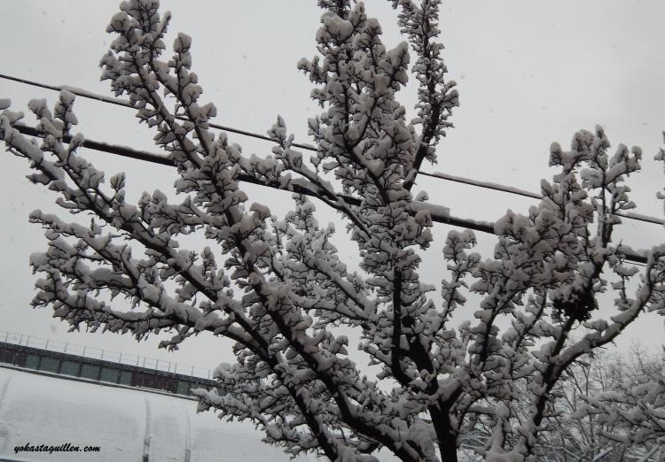 Nieve sobre los arboles