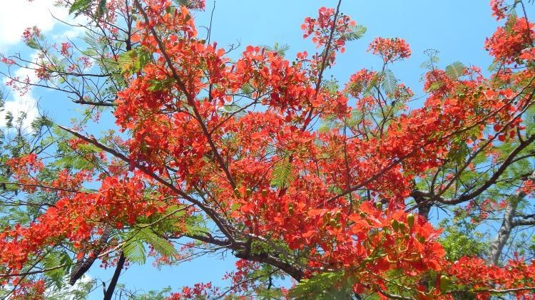 Naturaleza y color todo en un solo lugar, Santo Domingo, RD